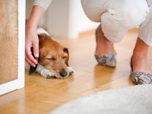 Die Füße von Andrea Lawlor in eleganter Hose. Heruntergebeugt zu ihrem Hund Jeff krault sie ihn, während er auf dem Boden liegt und entspannt